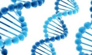 Генетическая предрасположеность