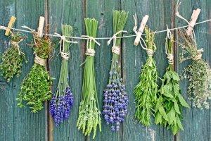 Сбор трав для лечения