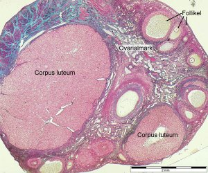 Ткани и клетки органа